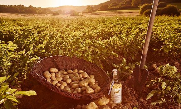 Windspiel Vodka auf Kartoffelfeld platziert