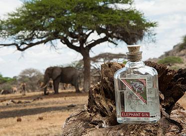 Elephant Gin im Vordergrund, Elefant im Hintergrund