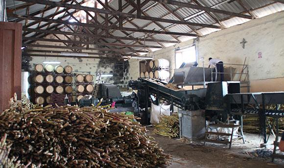 Zuckerrohranbau und -verarbeitung