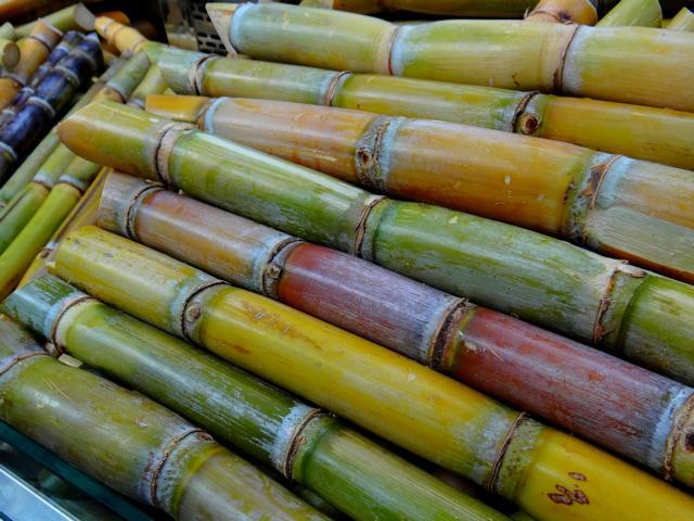 K640_sugar-cane-276242_1920