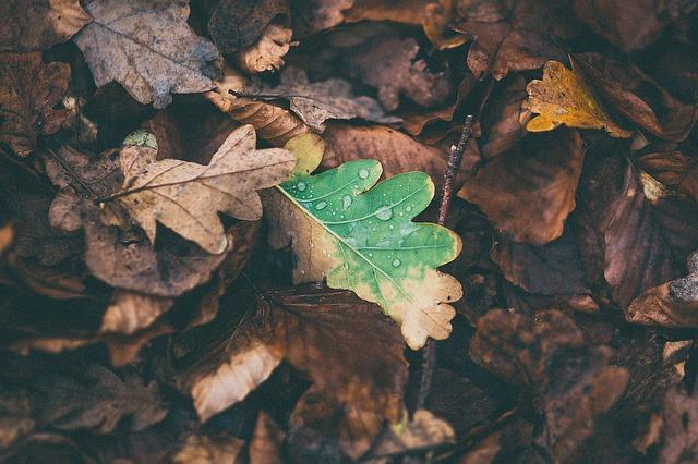 leaves-1149004_640